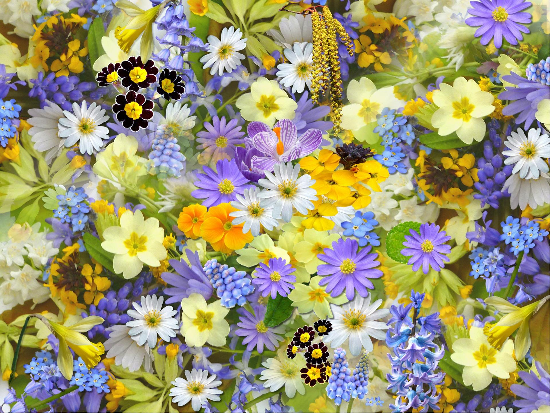 Chiropractor Orem flowers